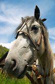 Horse Portrait. poster