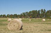 picture of hayfield  - A South Carolina uplands hayfield with round bales - JPG
