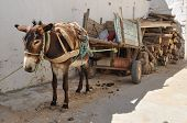 stock photo of donkey  - Donkey of carriage the market in Nabeul Tunisia - JPG