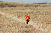 Hunter Upland
