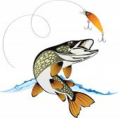Pike And Fishing Lure With Water Splash, Isolated On A White Background, Colored Vector Illustration