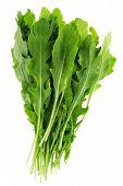 Arugula Leaf