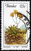 Postage Stamp Transkei, South Africa 1986 Soap Aloe
