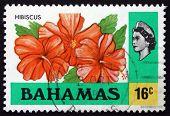 Estampilla Bahamas 1976 hibisco, flor