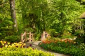 pic of rockefeller  - A picturesesque footbridge in a wooded garden with tulips - JPG