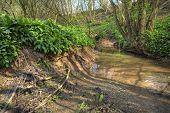 Small River, England