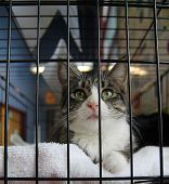 a cat in a local shelter - shot at high iso