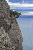 image of juniper-tree  - Juniper tree on a cliff above the sea - JPG
