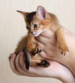 Portrait Of A Cute Kitten In Female Hands