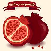 Vector Pomegranate Illustration