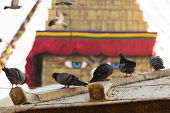 Pigeons, and Boudhanath stupa - the symbol of Nepal, with colorful prayer flags in the background.