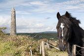 Irish Horse And Ancient Round Tower