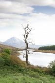 Single Lone Tree In Donegal Scenic View