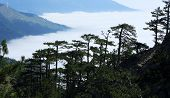Clouds On The Hillside. Coniferous Forest. Tarahtash Path. Crimea, Ukraine