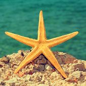 picture of a starfish on a rock of a beach, with a retro effect