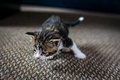 Baby Cat Having Fun