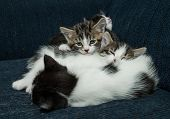 Many Cats Relaxing On Sofa