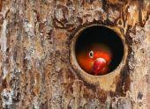 Liebe Vogel