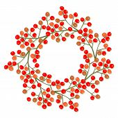 rowan berry mountain ash berries beautiful delicate autumn season decoration wreath on white