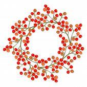 rowan berry mountain ash berries beautiful delicate autumn season decoration wreath on white