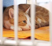 stock photo of spayed  - a cat in a local shelter shot at high iso - JPG