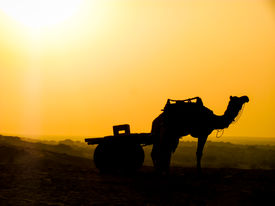 image of camel-cart  - Silhouette of a came and cart standing in the middle of a desert under the scorching sun - JPG