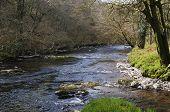 Dane's Brook Joins River Barle