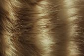 Macro Close Up On A Cat's Fur