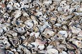 image of discard  - Discarded oyster shells are piled in a heap - JPG