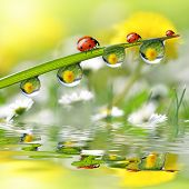 Fresh grass with dew drops and ladybugs close up