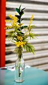 Mimosa in a vase on table