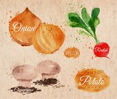 Vegetables watercolor radishes, onions, potatoes, champignons kraft