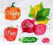 Vegetables watercolor corn, broccoli, chili, eggplantpumpkin, beet, pepper, cucumber
