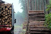 Haulage timber