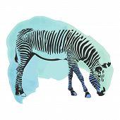 Colorful Watercolor Zebra Cover