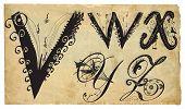 Curly Playful Alphabet - Hand Drawn Vector - Part: V-z
