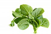 Basella Spinach