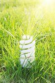 eco bulb on green grass and sun