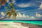 palm tree on a background of tropical turquoise sea