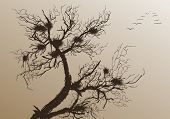 Bare Tree With Flying Birds. Vector