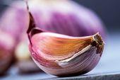 Fresh garlic.Macro - studio concept.
