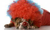 Dog Dressed As A Clown