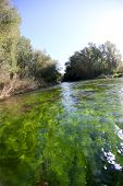 View of fishing river with green algae