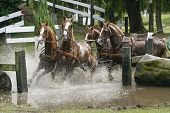 Four Horses Galloping Through The Water.
