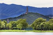 Yue Feng Pagoda Lotus Garden Willow Trees Summer Palace Beijing China