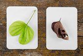 A moldered leaf and a green leaf