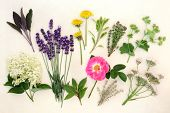 Herb and flower selection used in alternative medicine over mottled cream background.
