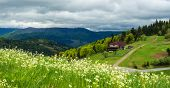 image of coniferous forest  - Landscape in the mountains with wildflowers in the foreground and a farmhouse on the road going to the coniferous forest - JPG