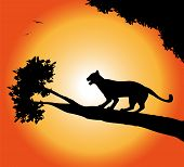stock photo of panther  - vector silhouette of panther  in the sunset - JPG
