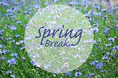 picture of spring break  - Spring break concept - JPG